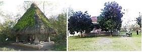 پوشش خانه توسط درختان و کندوج