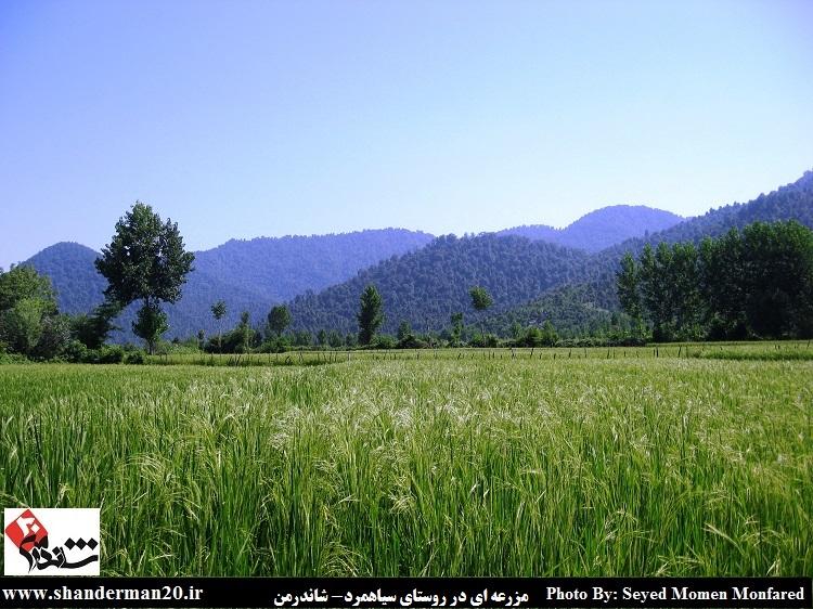 مزرعه ای در سیاهمرد شاندرمن- سید مومن منفرد