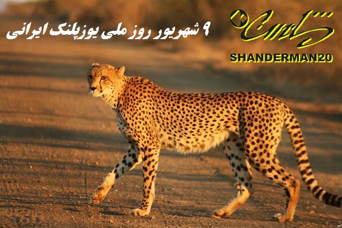 نهم شهریور روز ملی یوزپلنگ ایرانی