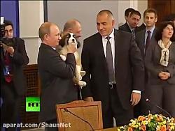 سگ گله تالشی؛ هدیه وزیر دفاع روسیه به ولادمیر پوتین