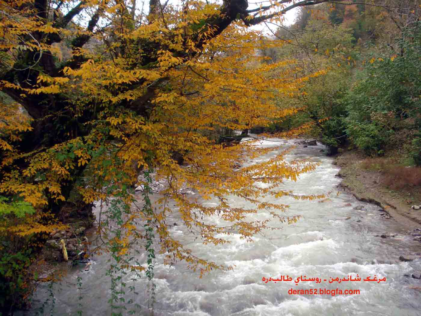 پاییز هزار رنگ شاندرمن